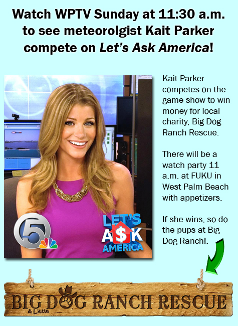 On let s ask america to win money for big dog ranch rescue wptv com