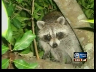 Rabies alert in Indian River County