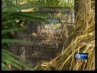 Wild otter bites third person in western Boca Raton