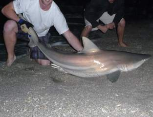 shark fishing_20110105124752_JPG