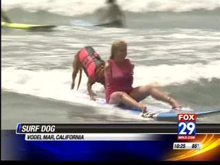 Dog helps the disabled surf