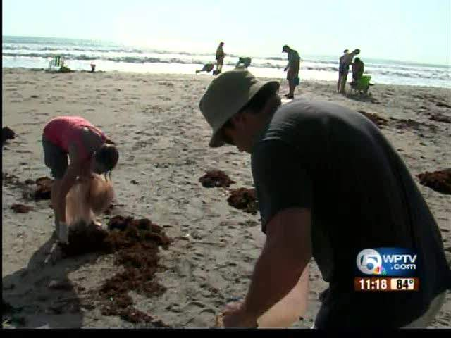 Volunteers clean up beach after Irene 08/28/11