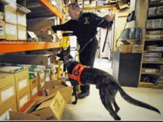 Boca_K-9_for_hire_20111001172249_JPEG