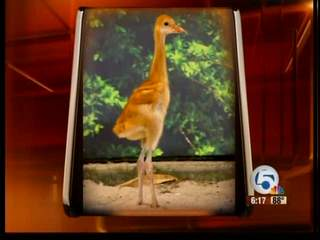 SeaWorld welcomes baby crane