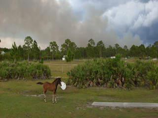 Fellsmere_fire_horse.jpeg_20120508175436_JPG