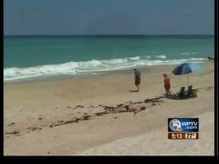Beach-goers cautious after shark bit woman