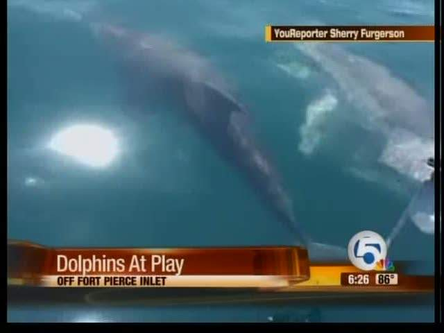 Dolphins play in Ft Pierce Inlet
