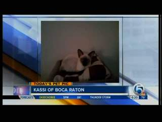 Friday's Pet Pic: Kassi of Boca Raton
