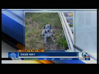Wednesday's Pet Pic: Dasie May