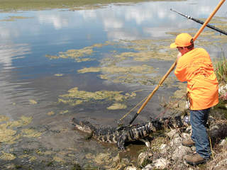 Alligator hunters may soon be able to use handguns, pursue gators 24 hours a day
