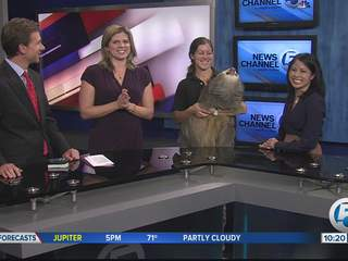 Sloth visits WPTV studio