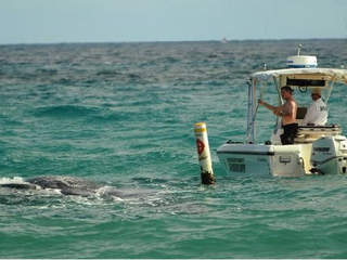 WPTV_boat_towing_whale_carcass_20121217102312_JPG