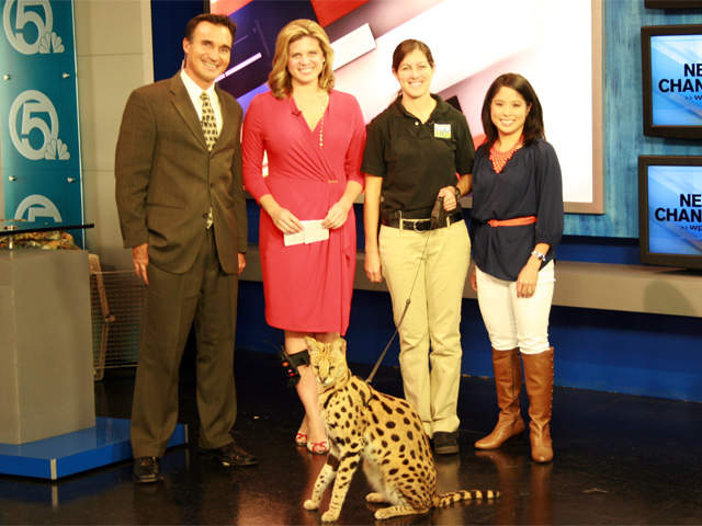 WPTV-Ashley-James-Palm-Beach-Zoo-cat-visit_20130202133430_JPG