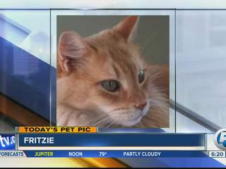 Thursday's Pet Pic: Meet Fritzie