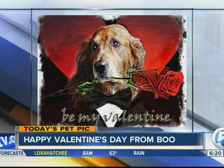 Friday's Pet Pic: Meet Boo