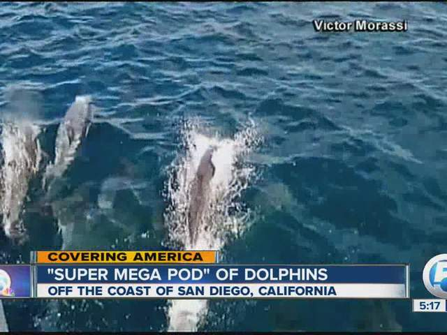 Mega pod of dolphins - photo#13