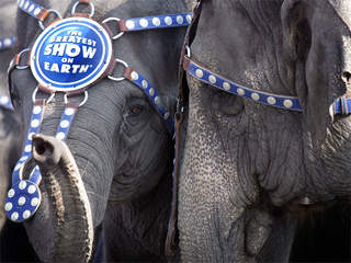 a reaction to shooting an elephant Opinions expressed by forbes contributors are their own  recently godaddy ceo bob parsons was shown in video shooting and killing an elephant in zimbabwe and facebook's mark zuckerberg.