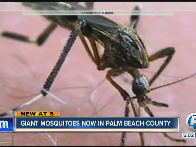 Palm Beach County Mosquito Control