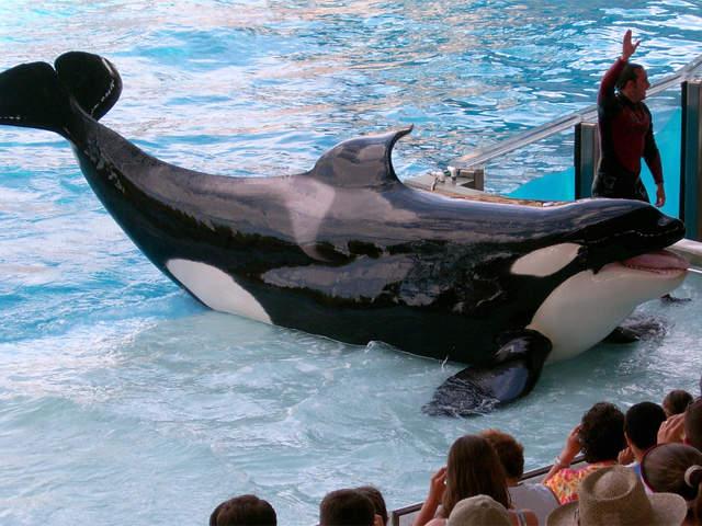 Seaworld comments on blackfish film tilikum captive orcas and more