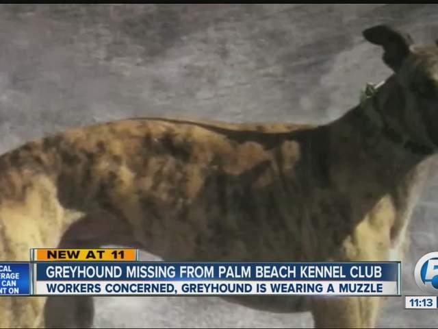 Palm Beach Kennel Club Dog Racing