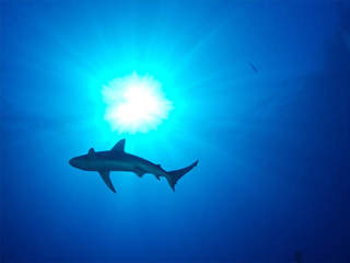 Petition aims to ban shark fin sales