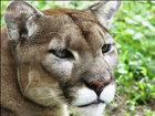 Man holding panther cubs sparks investigation