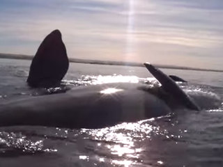 VIDEO: Kayakers lifted out of the ocean by whale