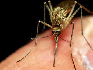 Official: Zika could 'hang around' a year or two