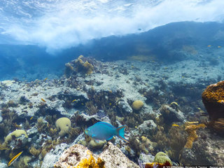Plastic bag ban suggested to protect reefs
