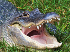 Victims rescued from alligator-infested canal