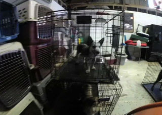 Dozens of animals seized from All Pet Rescue