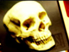 Human skull donated to Goodwill store
