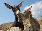 Missing driver wakes up in field of donkeys