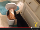 Tampa man wins $25K in cat video contest
