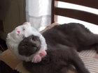VIDEO: Cat dresses itself for Halloween