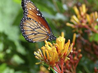 Mounts Botanical Garden fall plant sale Nov. 1-2