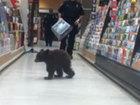 Bear cub wanders into Oregon drugstore