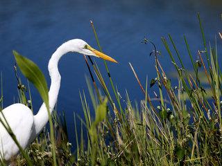 U.S. Senate approves Everglades water plan