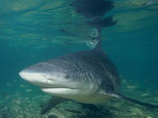 Shark attacks are rare in Southwest Florida