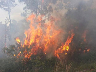 Firefighters respond to brush fire in Indiantown