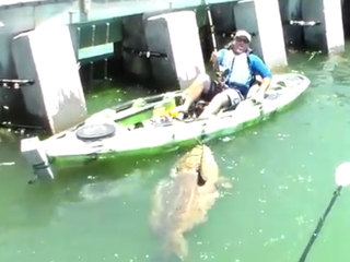 You could soon hunt goliath groupers in FL