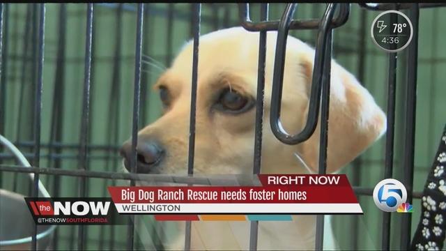 Big Dog Ranch Rescue Jobs