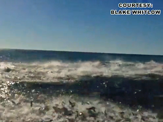 VIDEO: Shark frenzy caught on camera in Florida