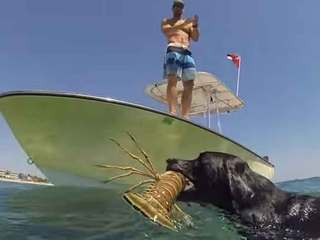 VIDEO: Florida dog trained to catch lobsters