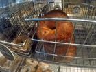 Bagel lovers beware; 2 stores temporarily closed