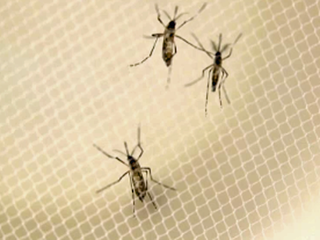 Aerial spraying for mosquitoes Tuesday evening