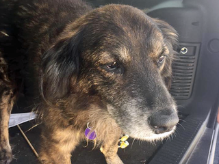 Dog missing when SUV stolen has been recovered