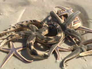 Beachgoers left 'starstruck'