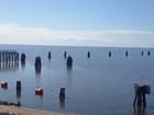 Algae making reappearance on Treasure Coast