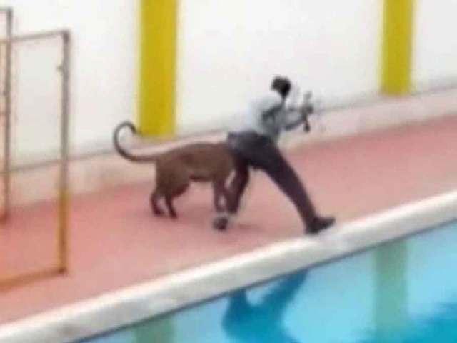 Leopard invades schools, attacks man